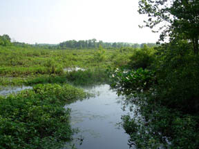 Cackley Swamp